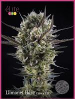Llimonet Haze Clásica CBD (3-seed pack)