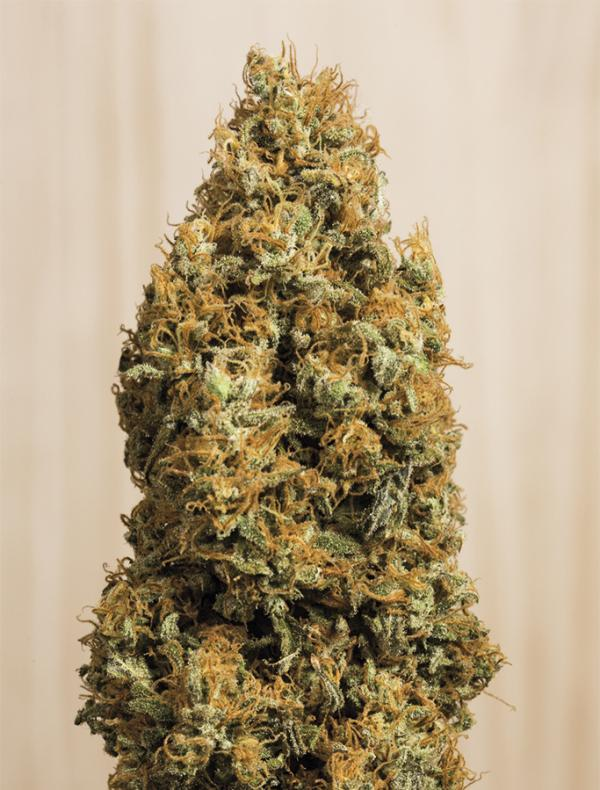 Green Crack CBD (3-seed pack)