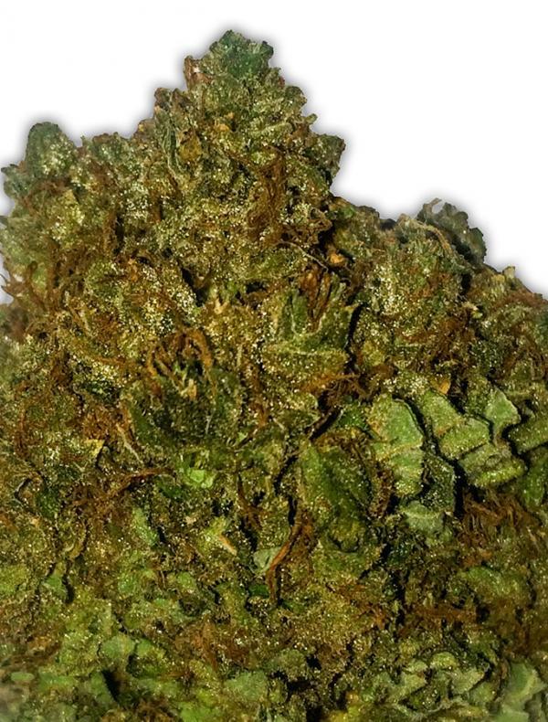Money Bush (Pack 3 graines)
