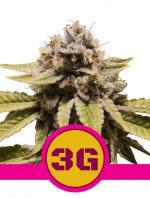 Triple G (1-seed pack)