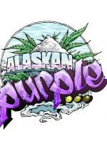 Alaskan Purple (Pack 3 graines)