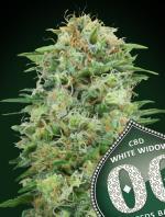 White Widow CBD (Pack 5 graines)