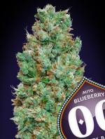 Auto Blueberry (Pack 5 semillas)