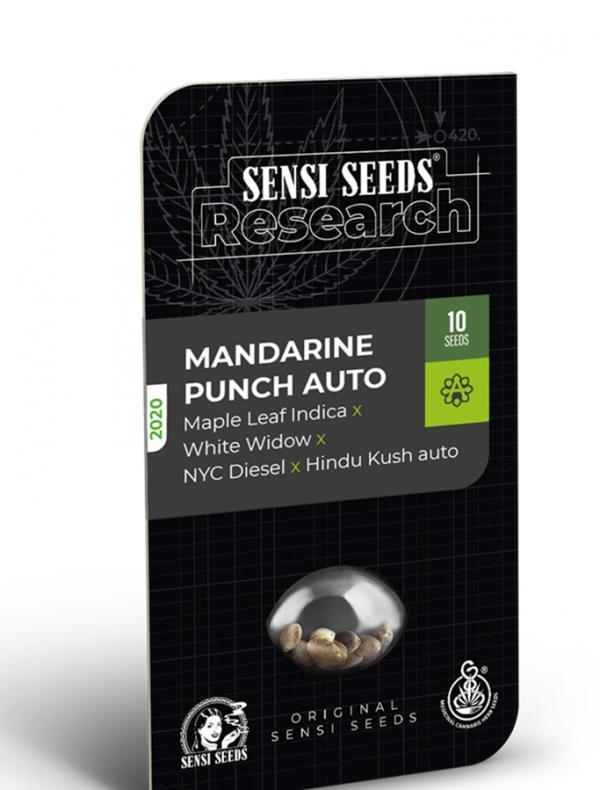 Mandarine Punch Auto (Pack 1 semilla)