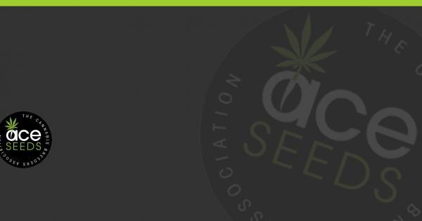 Graines de Cannabis Ace Seeds