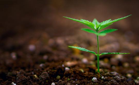 8 Online groups concerning Cool Autoflower Seeds For Sale Usa You Should sign Up With