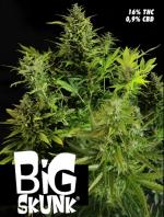 Big Skunk (Pack 1 graine)