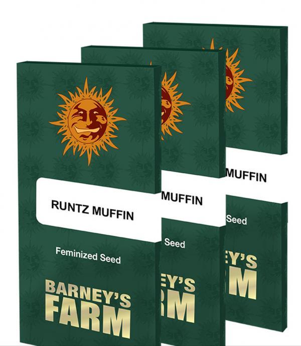 Runtz Muffin (Pack 1 graine)