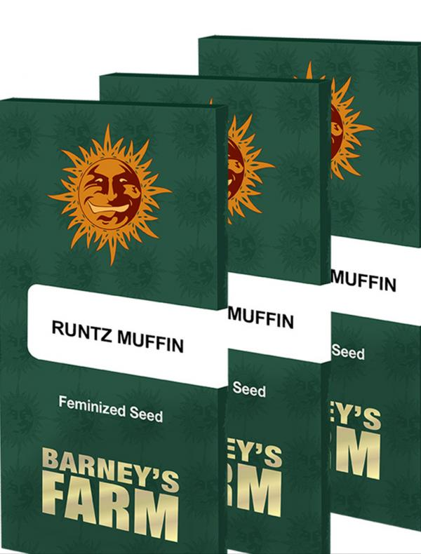 Runtz Muffin (1-seed pack)