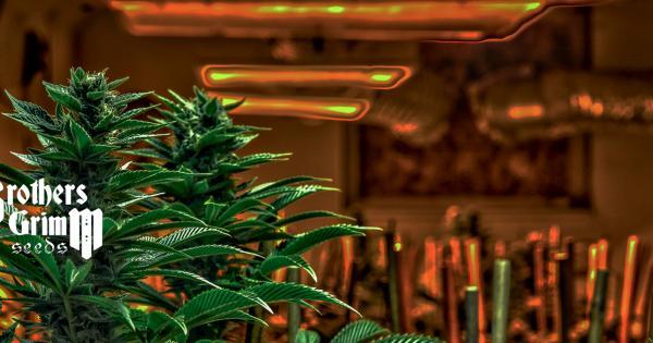 Semillas de Marihuana Brothers Grimm Seeds