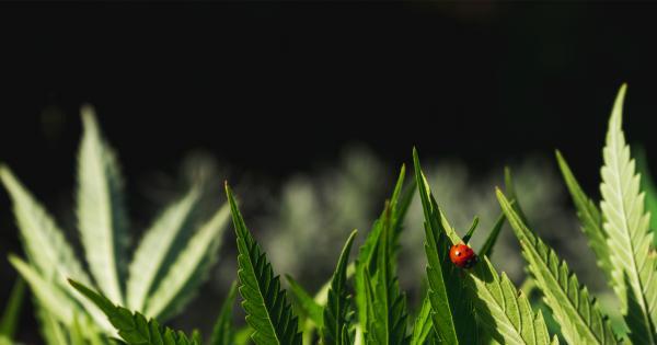 Insecticides Naturels pour Cannabis