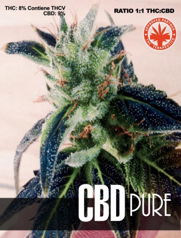 CBD Pure (3-seed pack)
