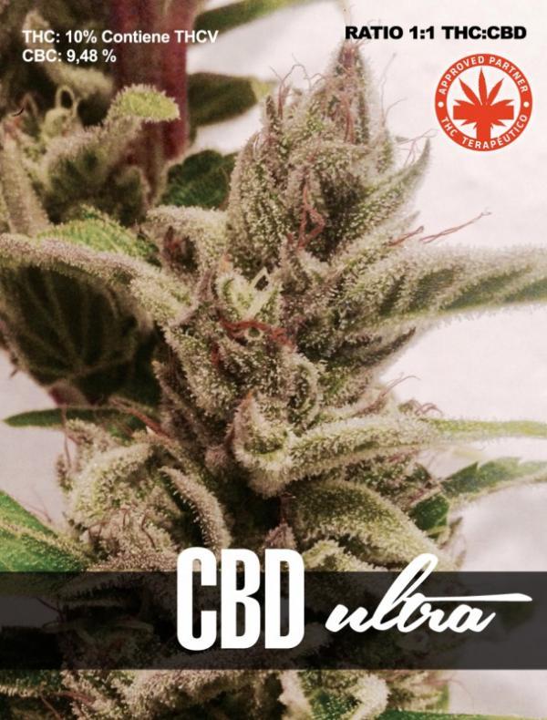 CBD Ultra (Pack 1 semilla)