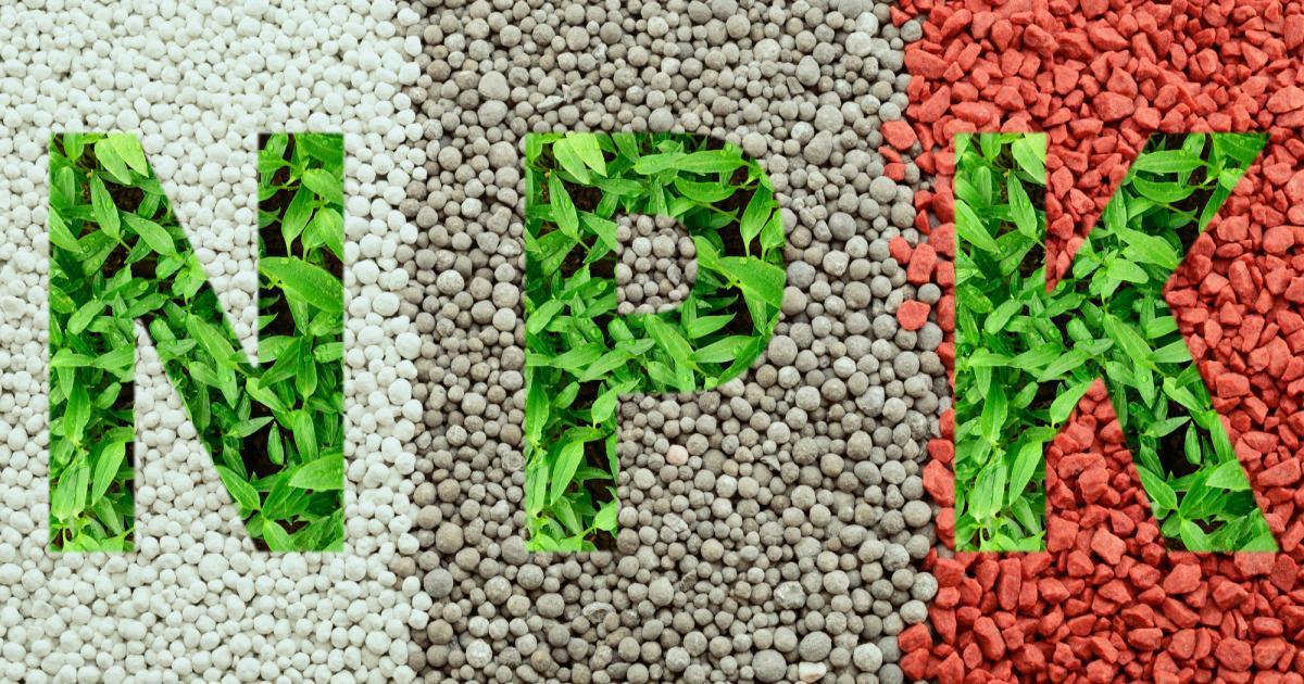 Les choses à savoir avant d'acheter des nutriments pour cultiver du Cannabis