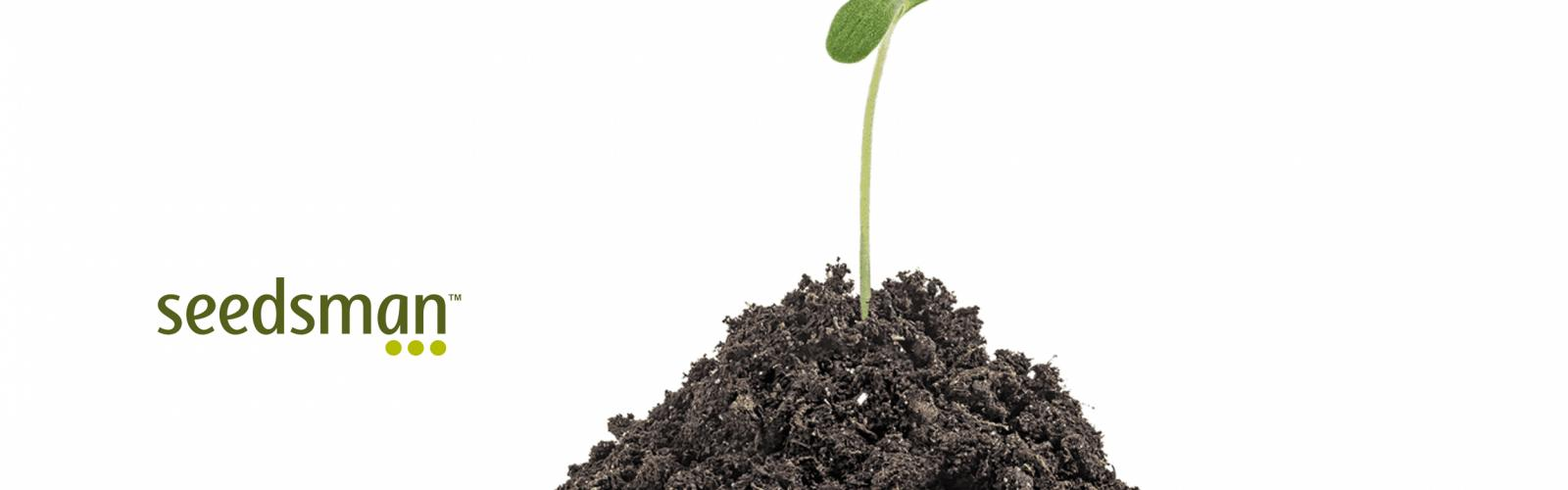 Seedsman Autoflowering Cannabis Seeds