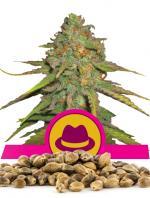 OG Kush (100-seed pack)