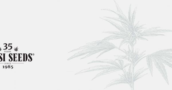 Graines de Cannabis CBD Sensi Seeds
