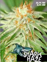 Shark Haze (Pack 1 semilla)