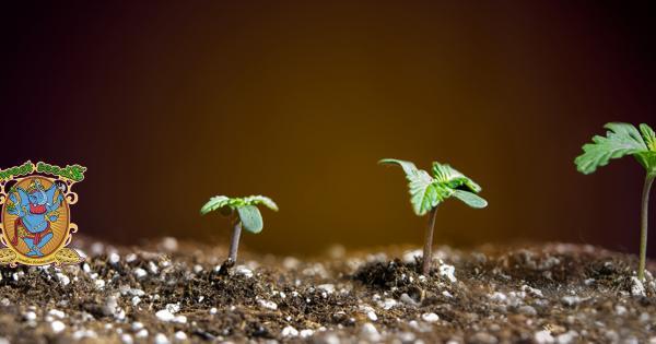 Sweet Seeds Cannabis Seeds