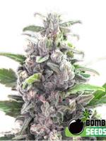 THC Bomb (10-seed pack)