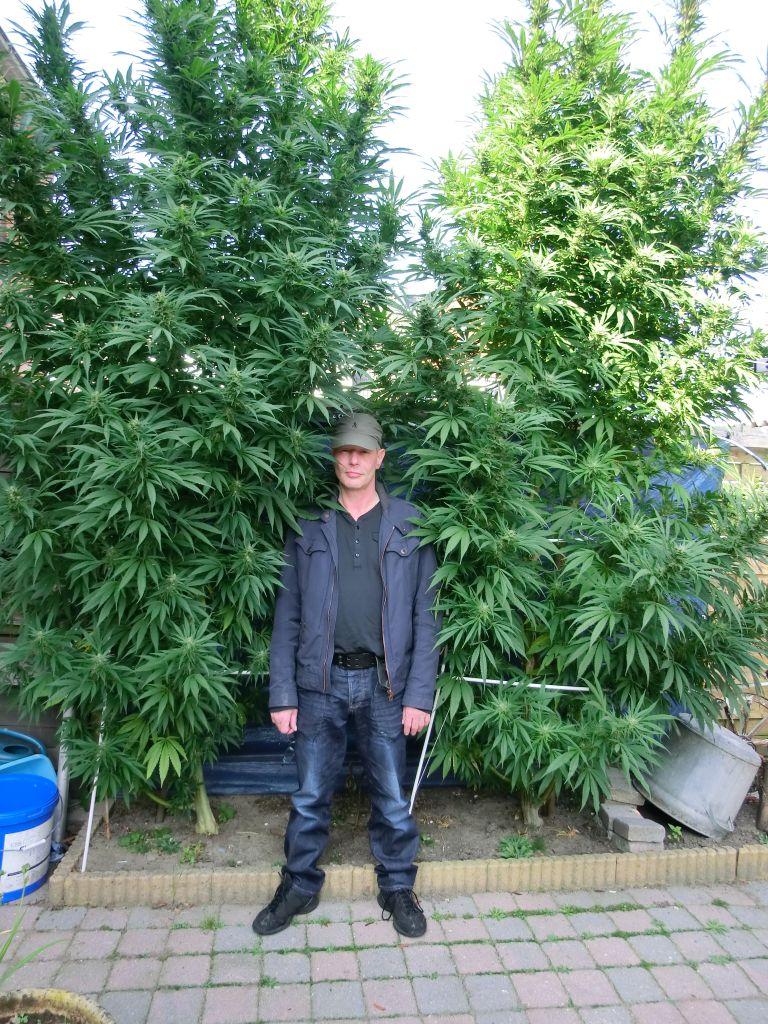 Сколько метров нужно конопле где можно купить конопляное семян