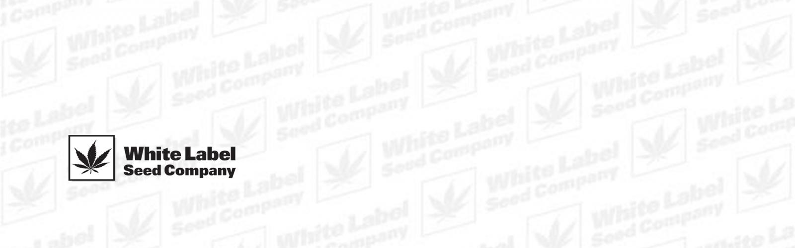 Graines de Cannabis Féminisées de White Label Seeds